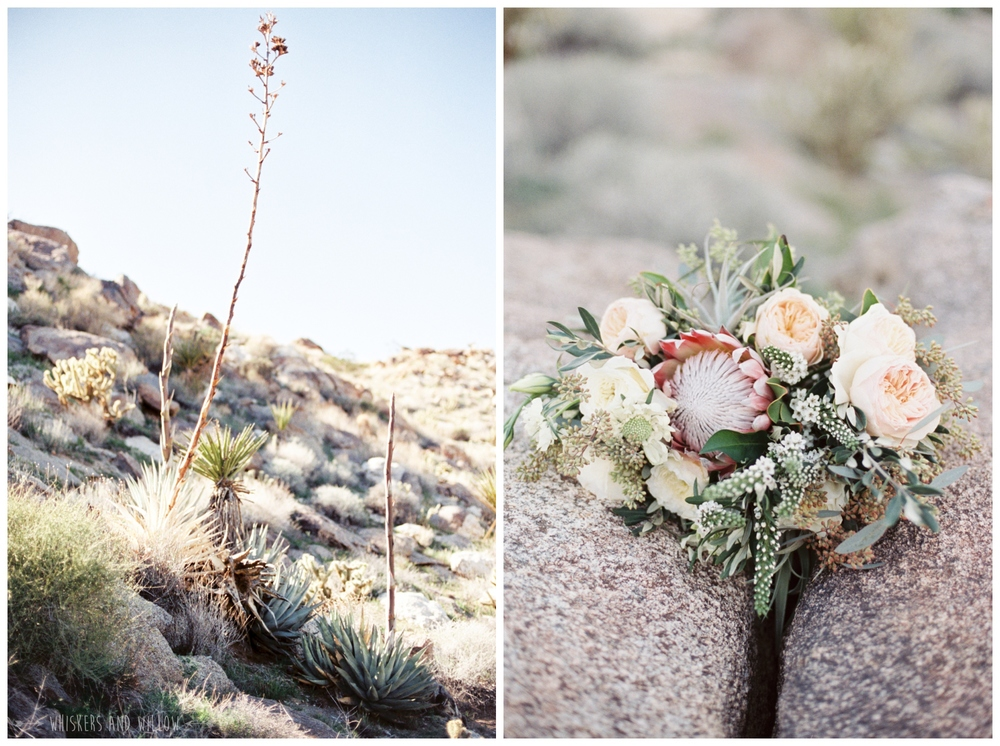 Desert wedding | Protea blush bridal bouquet by Bloom Babes | Whiskers and Willow Photography