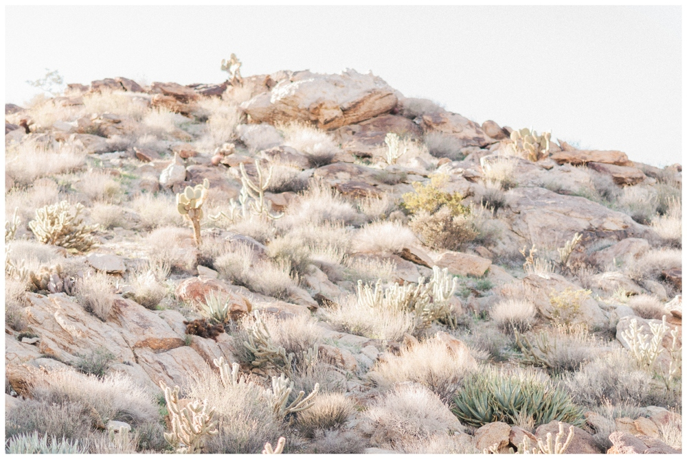 San Diego desert | Anza Borrego | Whiskers and Willow Photography