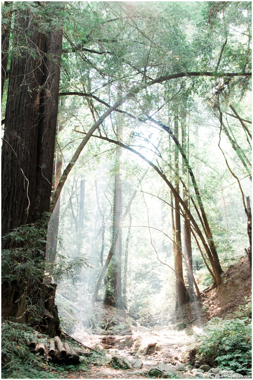 Forest wedding - San Diego Wedding Photography - Whiskers and Willow Photography