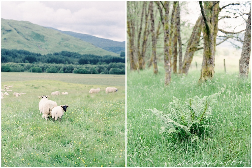 Scotland Travel Photography - Film Photographer - Whiskers and Willow Photography