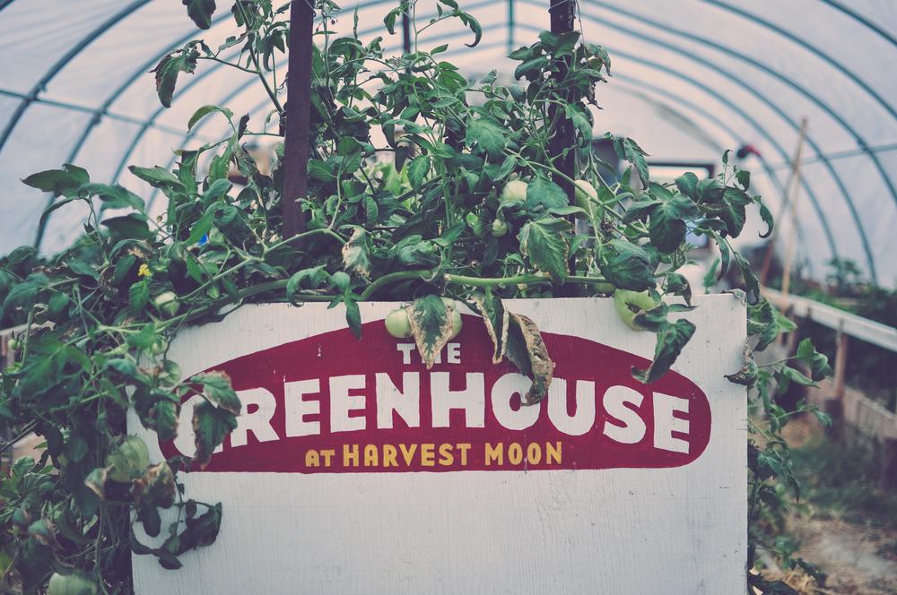 harvest_moon-11.jpg