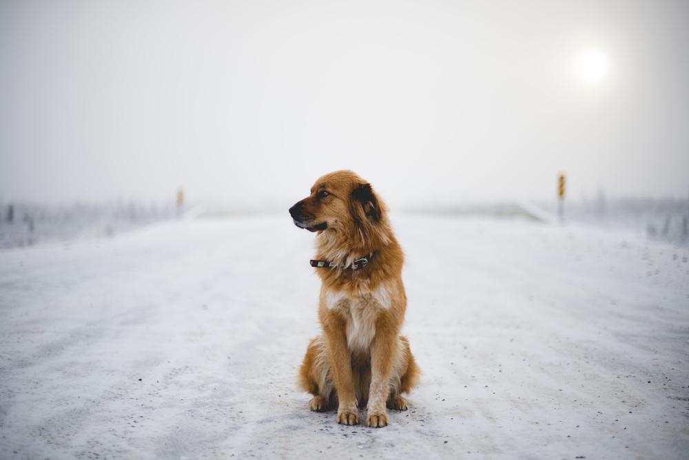 Alaska-40.jpg