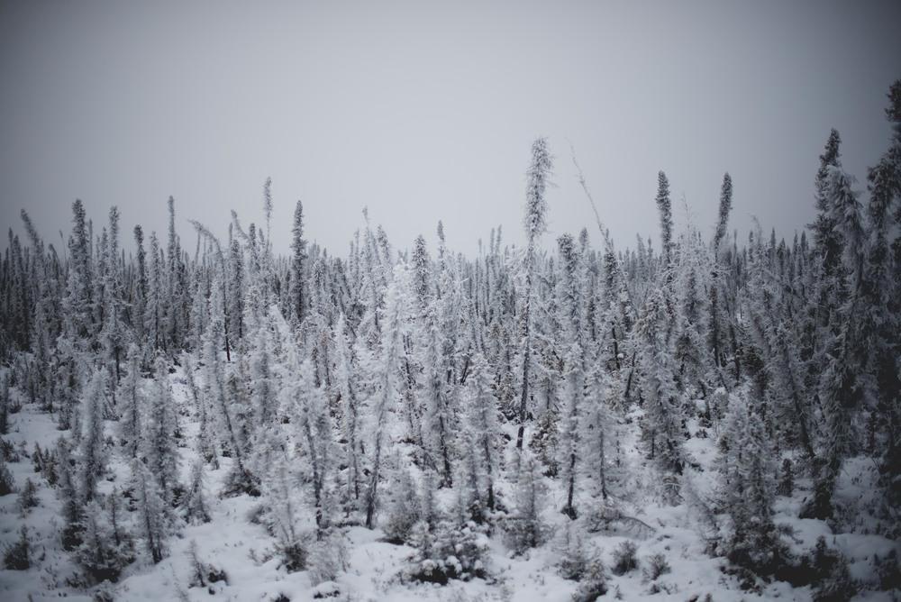 Alaska-42.jpg