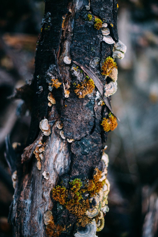 the_woods-10.jpg