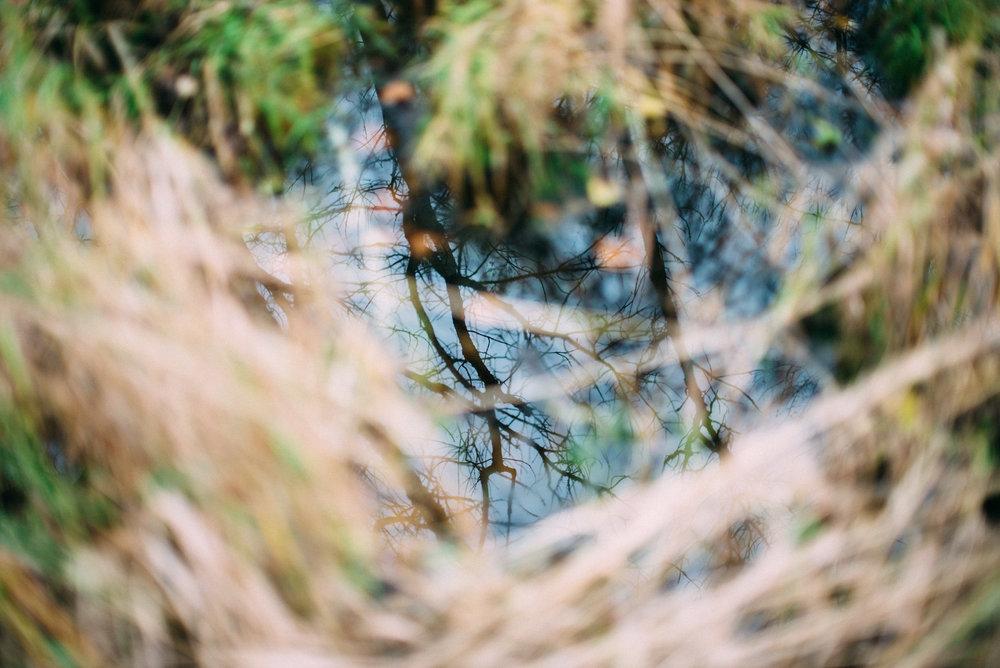 the_woods-12.jpg