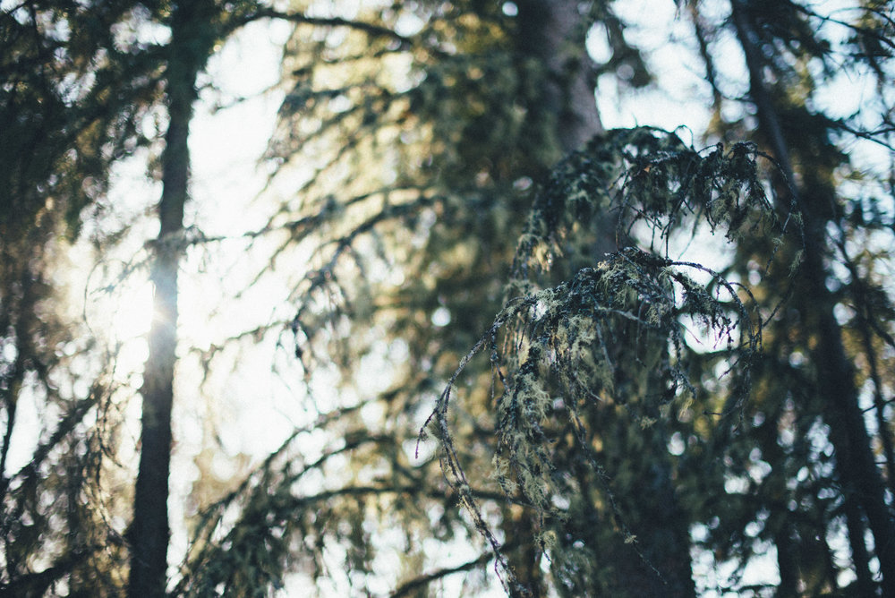 emilychristie_spring17-52.jpg