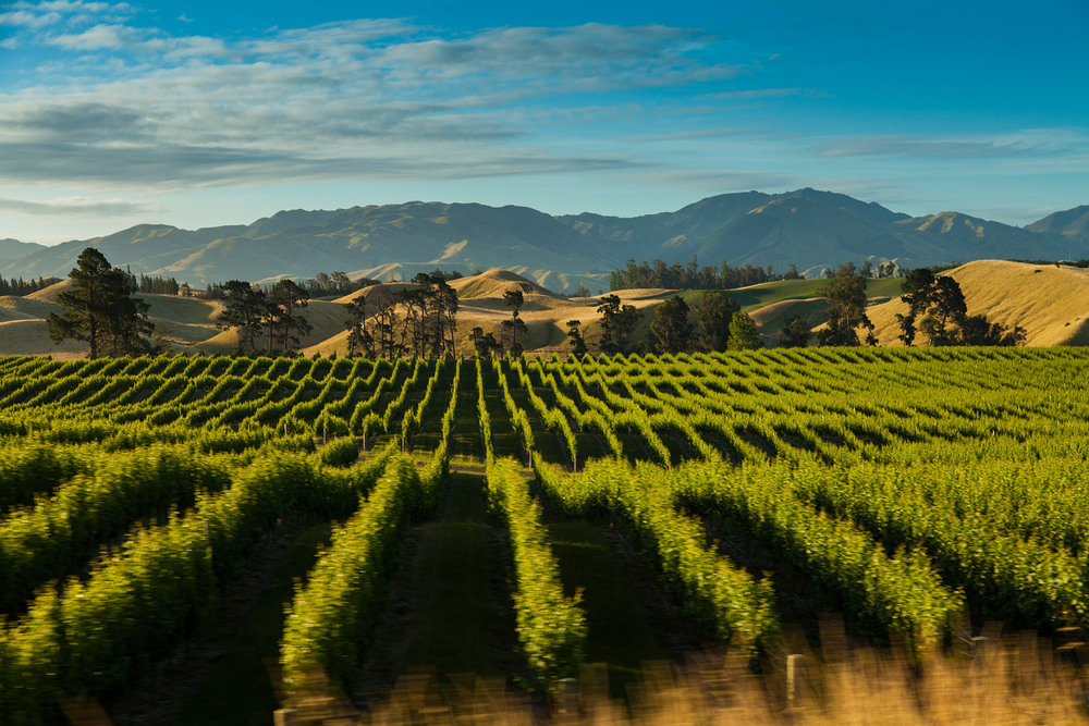 Marlborough Winery