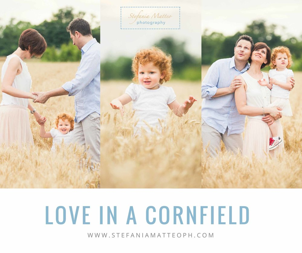 Love in a  Cornfield.jpg