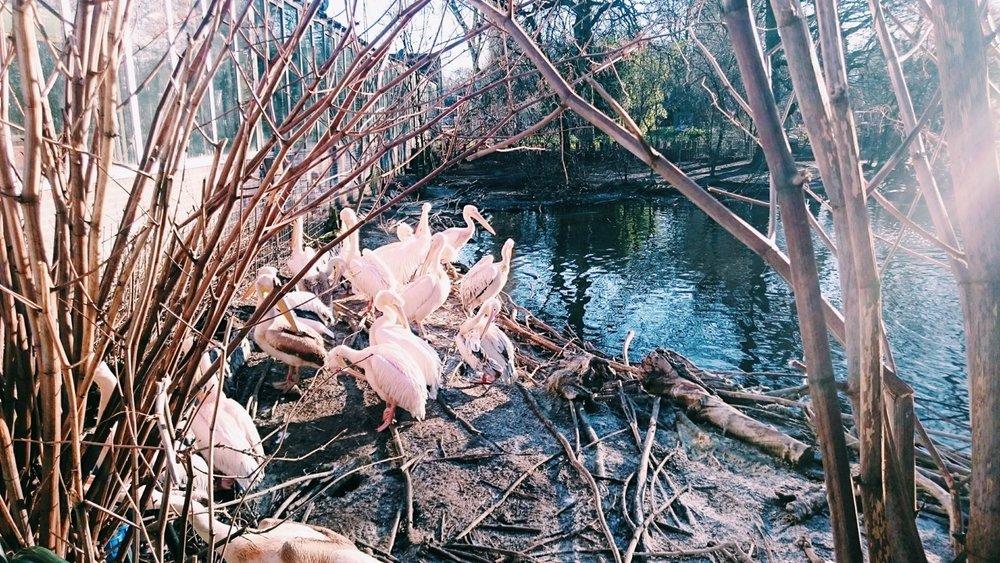 Flamingos+-+Amsterdam.jpeg