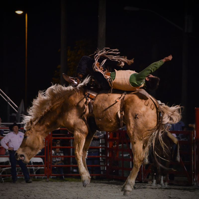 Homestead Rodeo-4.jpg