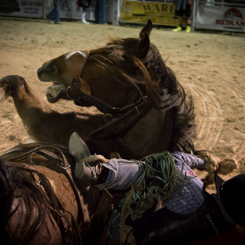 Homestead Rodeo-9.jpg