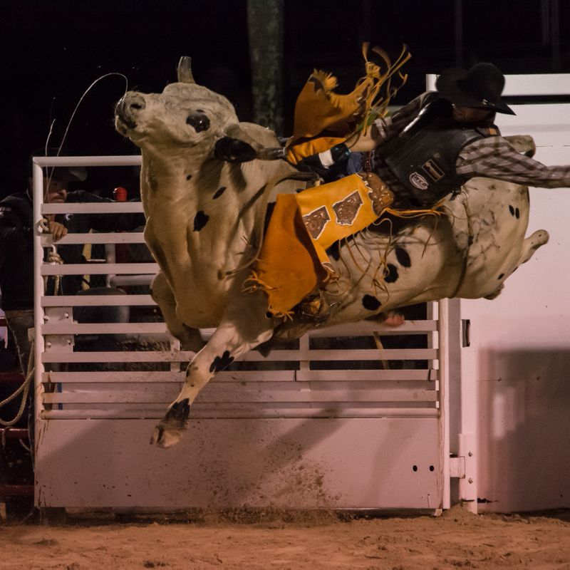 Homestead Rodeo-11.jpg