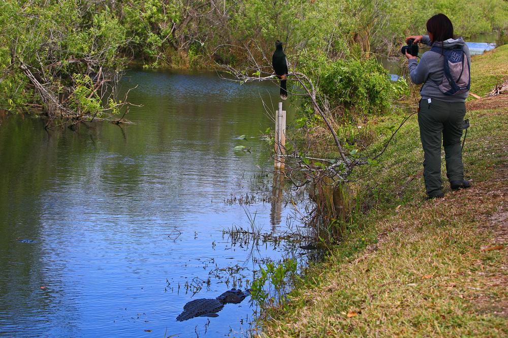 Photgrapher Bird and Reptile.jpg