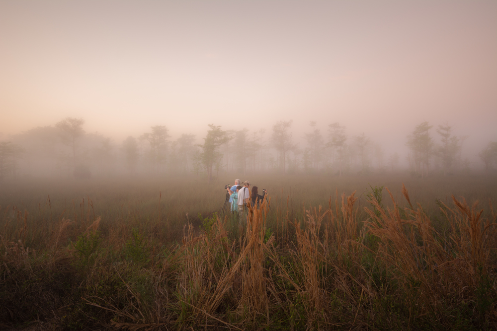 Everglades Morning-8.jpg