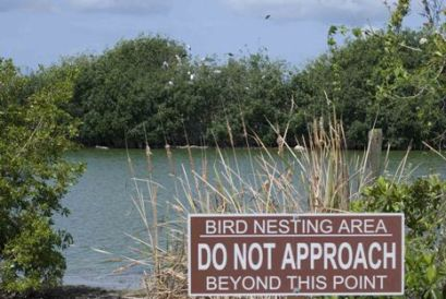 Courtesy of Everglades National Park Website