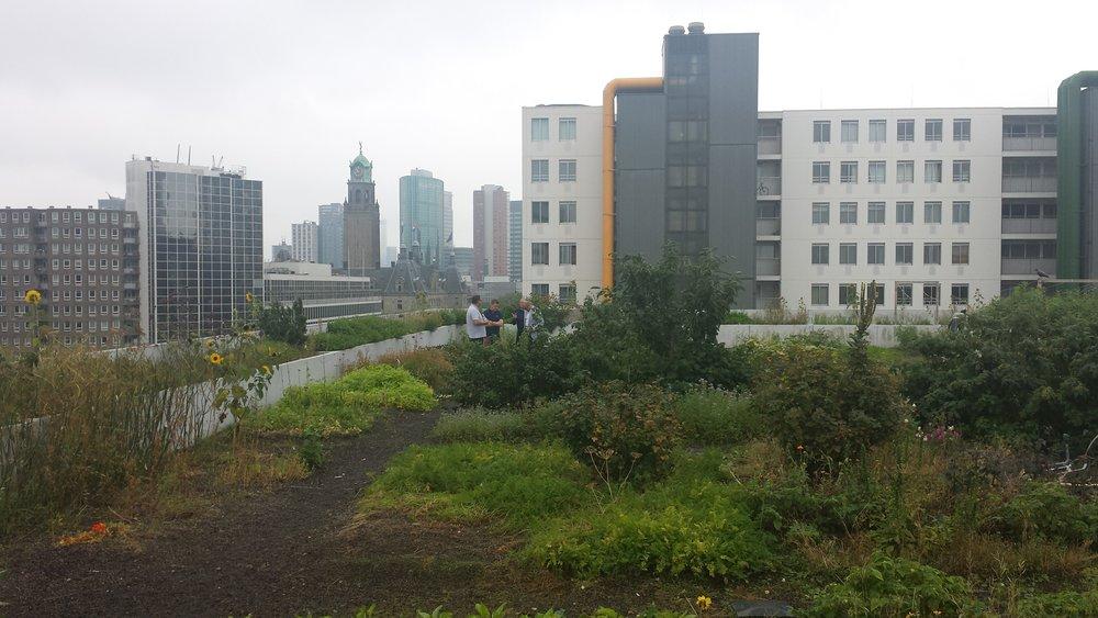 Dak Akker Schieblock Rotterdam
