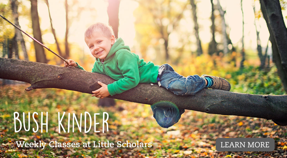 bush kinder web banner-01.jpg