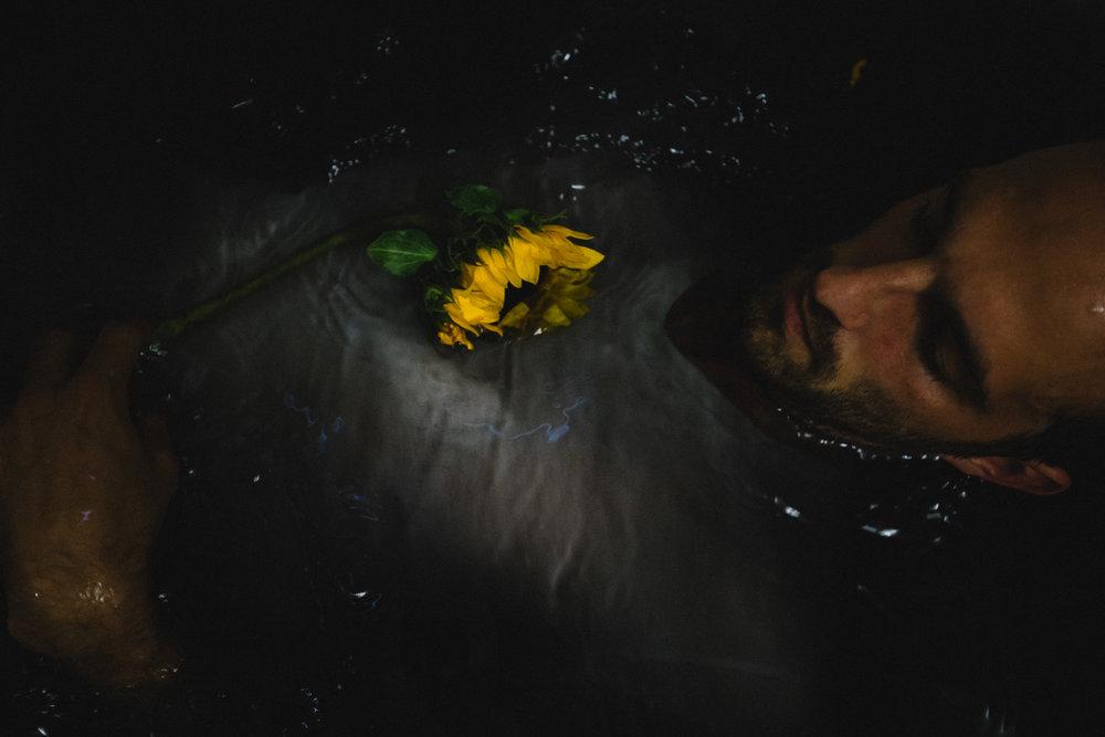 sunflowerday12.JPG