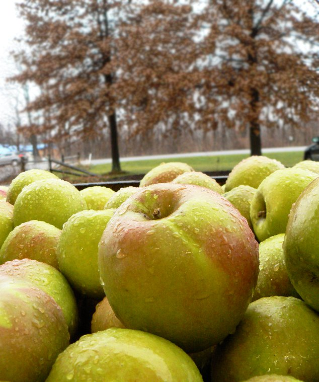 Twenty Ounce apples on special in November. Fill your own 1/2 bushel basket for seven dollars!