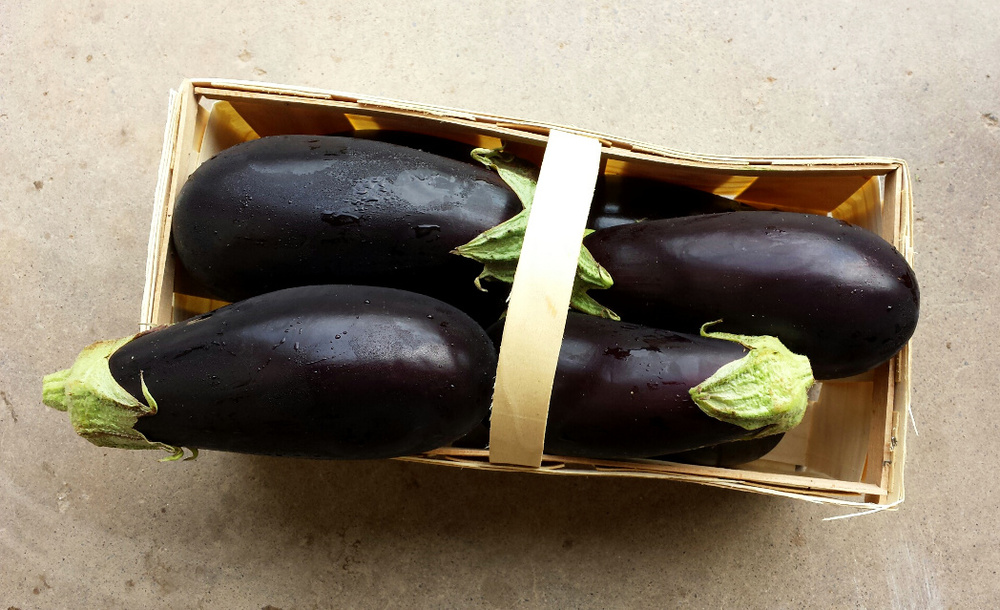 Eggplant, ready for parmesean, baba ghanoush, or eggplant lasagna!