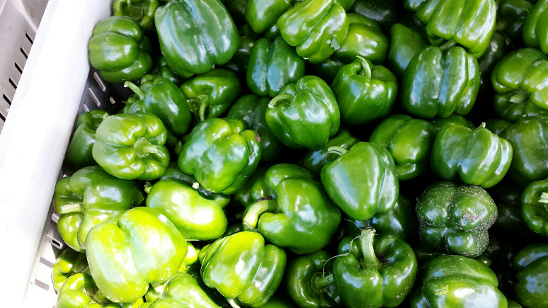 A bin full of green peppers waits in the shade.