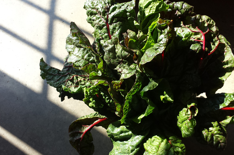Fresh homegrown Swiss Chard