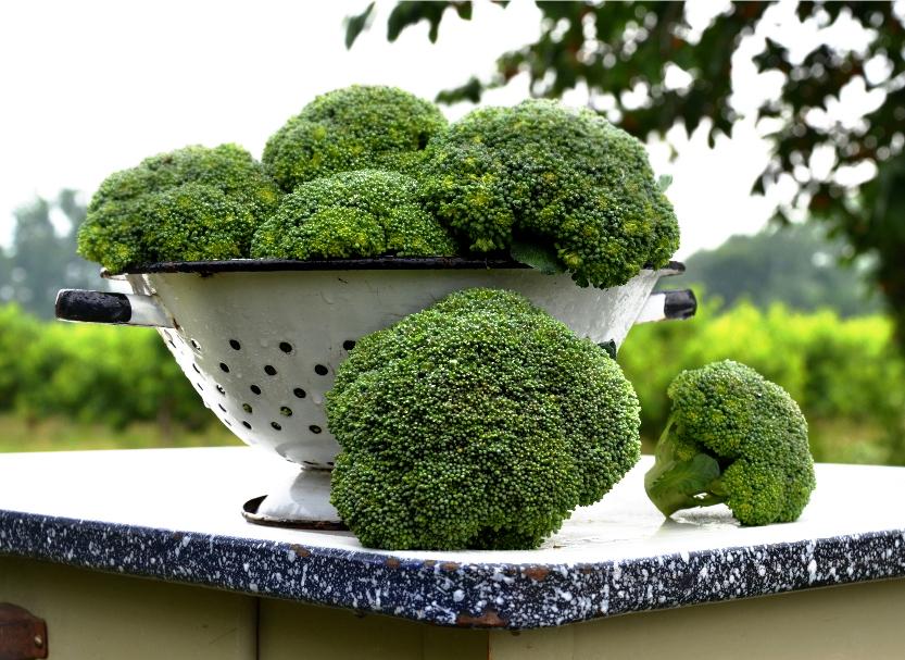 smbroccoli.jpg