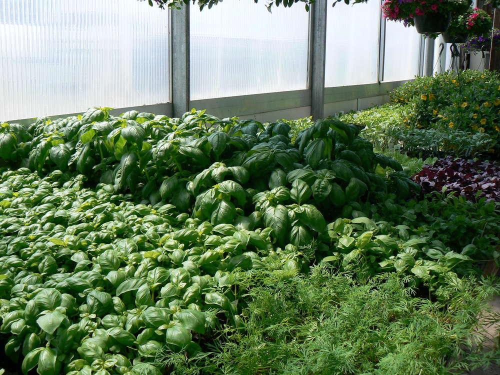 herbage.JPG