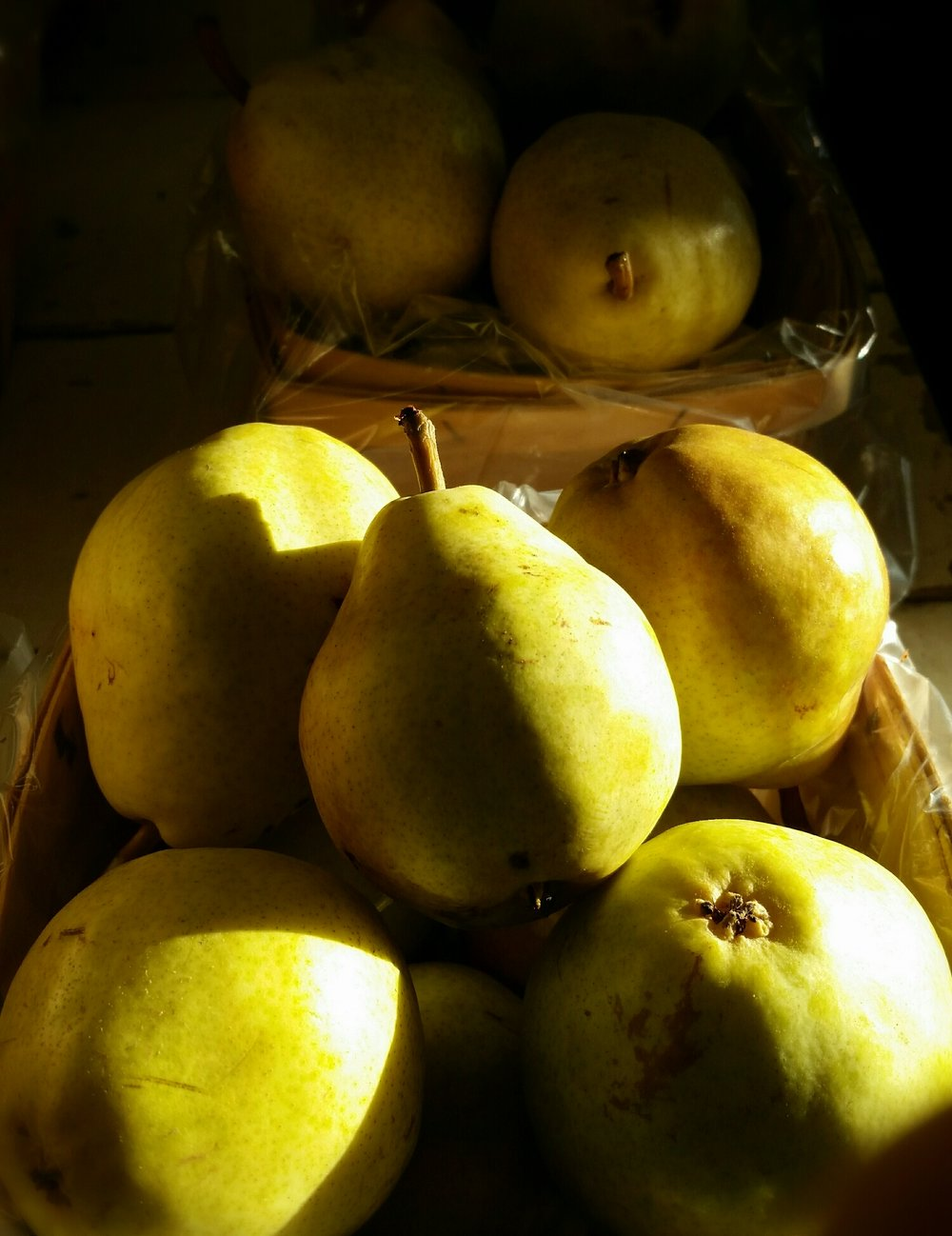 Bartlett Pears, ready to eat!