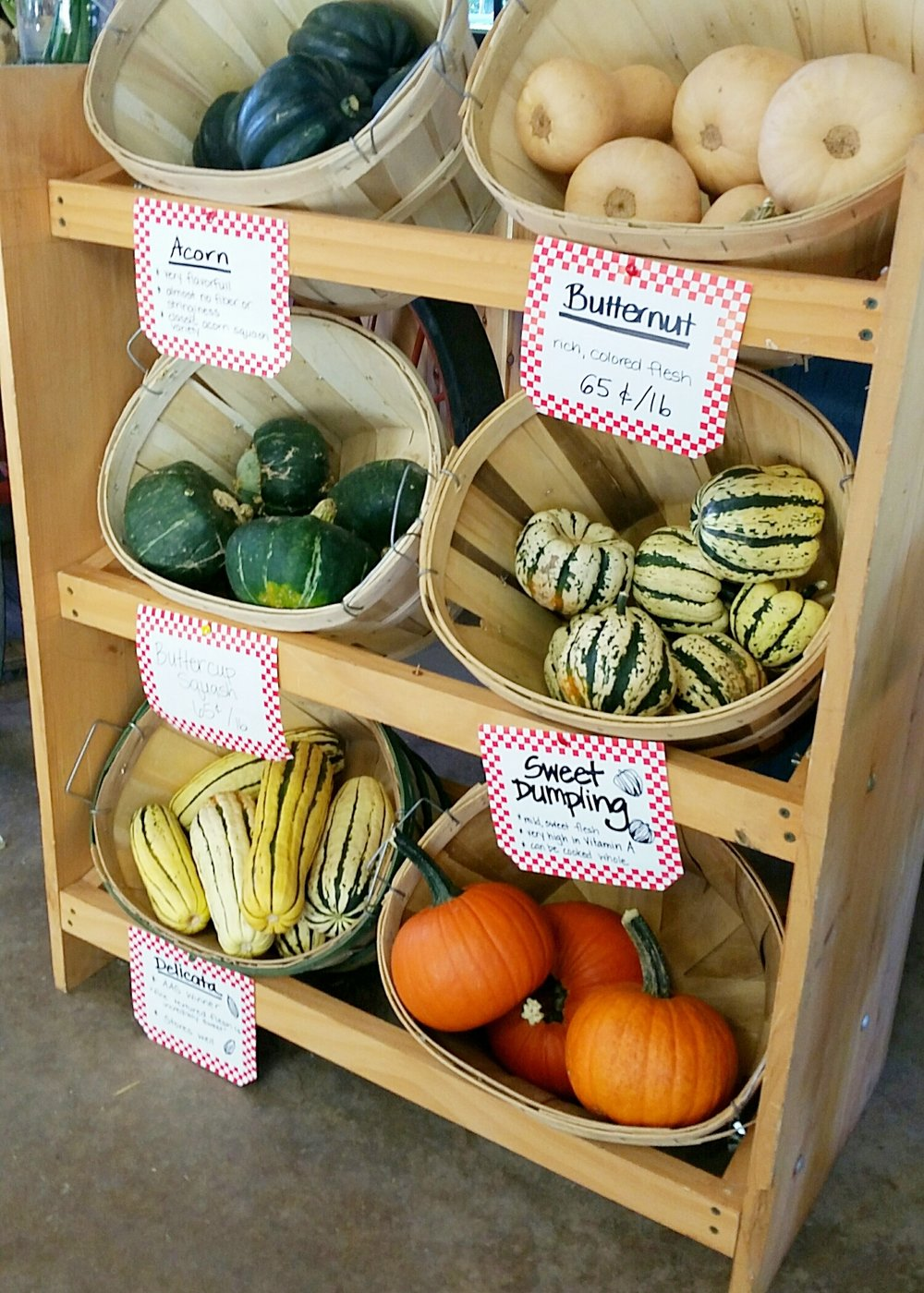 Winter Squash Varieties: Acorn, Butternut, Buttercup, Delicata, Sweet Dumpling, and Pie Pumpkins.
