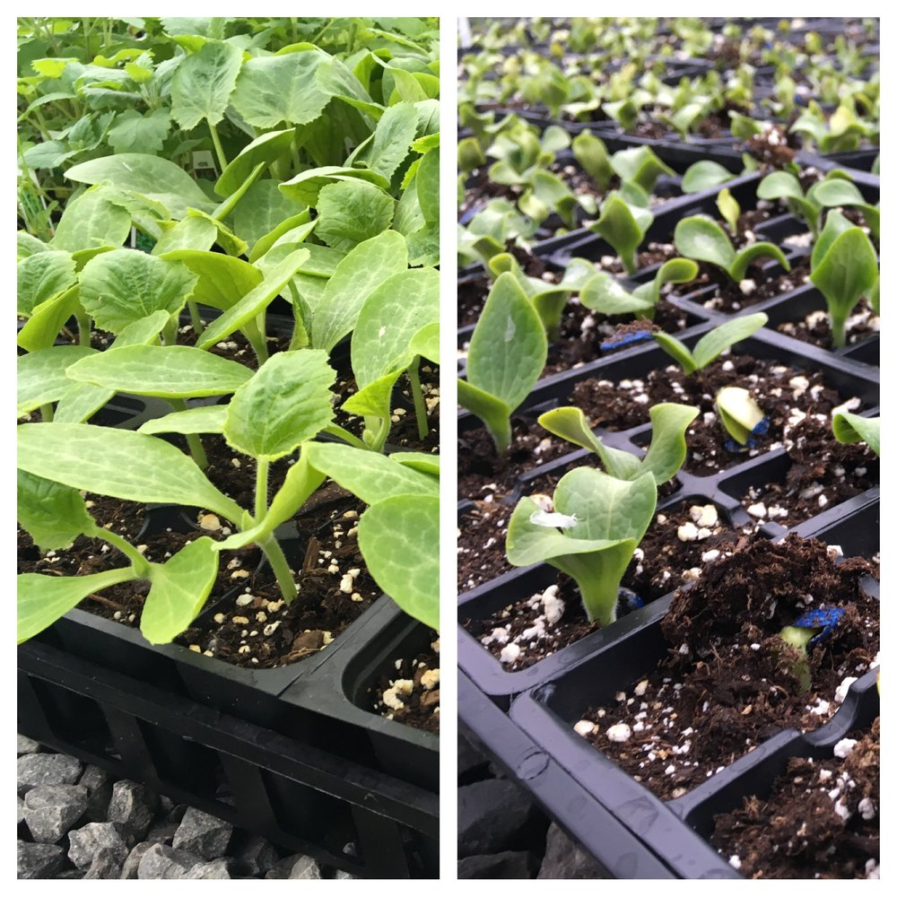 Pollinator plants on the left, planting number one on the right.