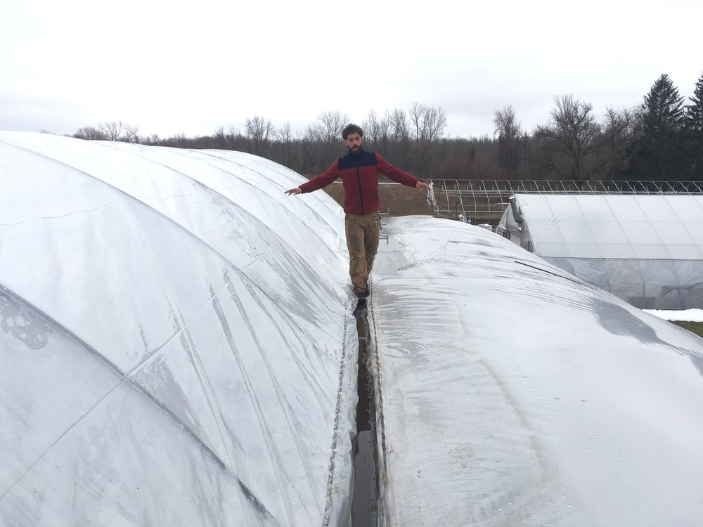 Ben traversing a gutter as we change the one of the plastic roofs on our greenhouse