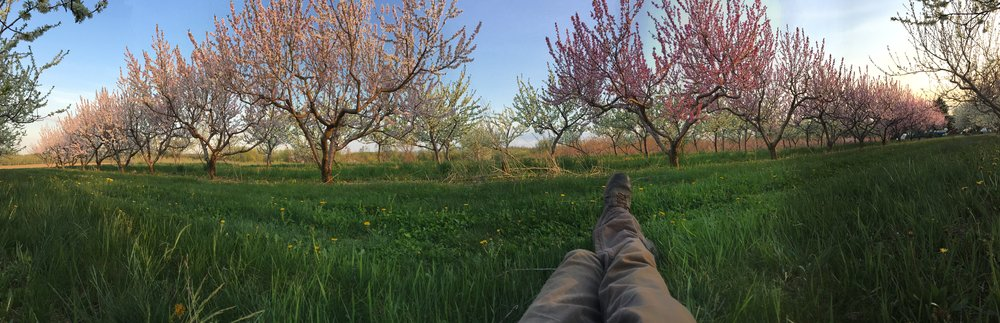 How to properly enjoy the orchard at the end of a long day of work.