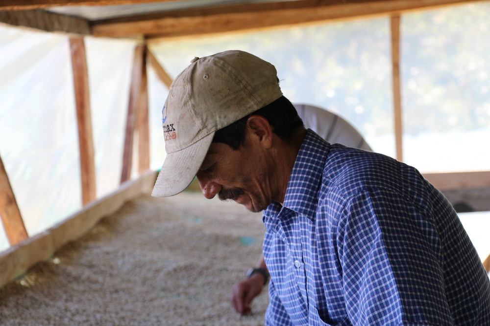 Isaias Cantillo, winner of the 2007 Colombian CoE, hand sorting parchment in his shaded drier.