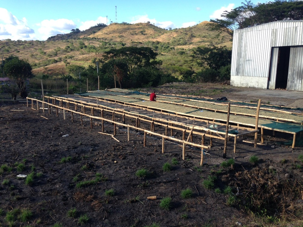 Raised beds at Beneficio Montecristo with first coffee being dried. Shade structure coming soon.