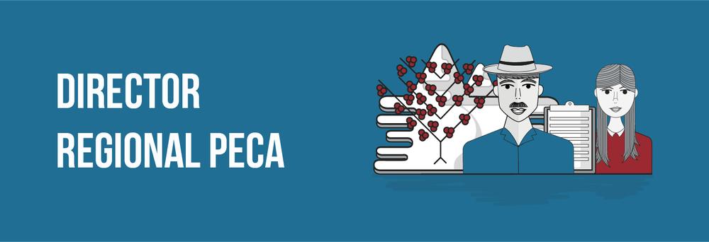 Director Regional PECA Ingeniero Agrónomo con experiencia mínima de cinco años en asistencia técnica y cinco años en cultivo y procesamiento de café. Con amplio conocimiento en Sostenibilidad, Post cosecha de café, Manejo agronómico de café, conocimiento y manejo de TIC´s,elaboración de indicadores,con orientación a resultados y visión gerencial. Descriptivo de Cargo: 1. Propósito Acompañar técnicamente a los tecnólogos y a los caficultores que le venden café a CARAVELA en la implementación y el diseño de nuevas tecnologías para la producción de café de alta calidad en las zonas asignadas, por medio del control y seguimiento de indicadores técnicos  2. Contexto  • Regional • Área: PECA • Líneas de Reporte: CEO 3. Caracterización  Acompañar en los tecnólogos en las visitas que realicen a los caficultores en la zona de influencia para evidenciar el conocimiento técnico que estos poseen y con su experiencia y la experiencia que se valide de los entes de investigación, aportar a los mismos, para que durante el ejercicio de su actividad se transmita a los caficultores este conocimiento técnico y mediante la medición de indicadores técnicos y de calidad se evidencie la mejora en la producción de café y se obtenga café de alta calidad.  4. Dimensiones • Alcance: Regional  5. Funciones A. Transferencia del conocimiento • Realizar transferencia de conocimiento a los colaboradores por medio de capacitaciones para asegurar el conocimiento técnico. • Divulgar a los caficultores de las zonas, nuevas tecnologías para mantenerlos actualizados en relación a temas de producción de café y manejo pos cosecha. • Realizar seguimiento a los tecnólogos en la implementación de nuevas tecnologías, para asegurar el desarrollo técnico en la operación. • Realizar mesas de trabajo en la que los tecnólogos participen y discutan temas técnicos generando documentos para generar nuevos ensayos. Resultado: Contar con las herramientas técnicas para que los tecnólogos puedan desempeñar sus funciones d