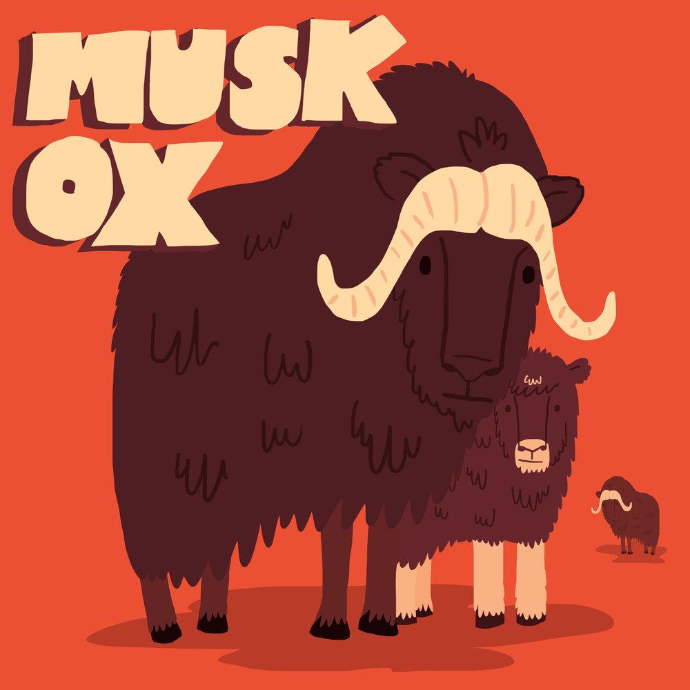 musk ox social post.jpg