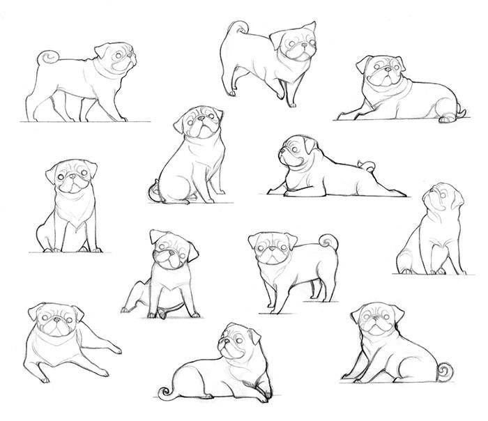 Animal study _ Pug