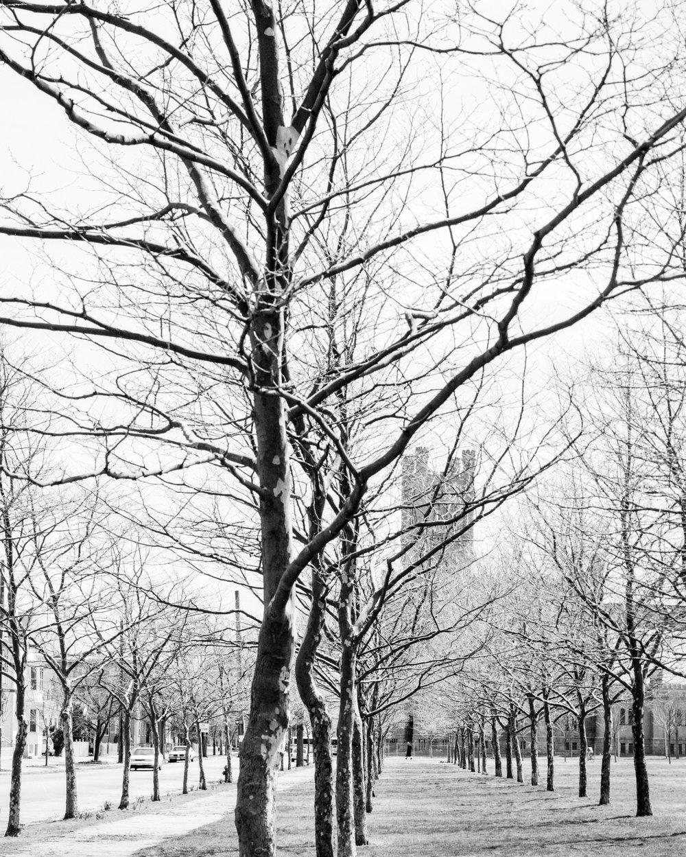 paradeground trees-Edit.jpg
