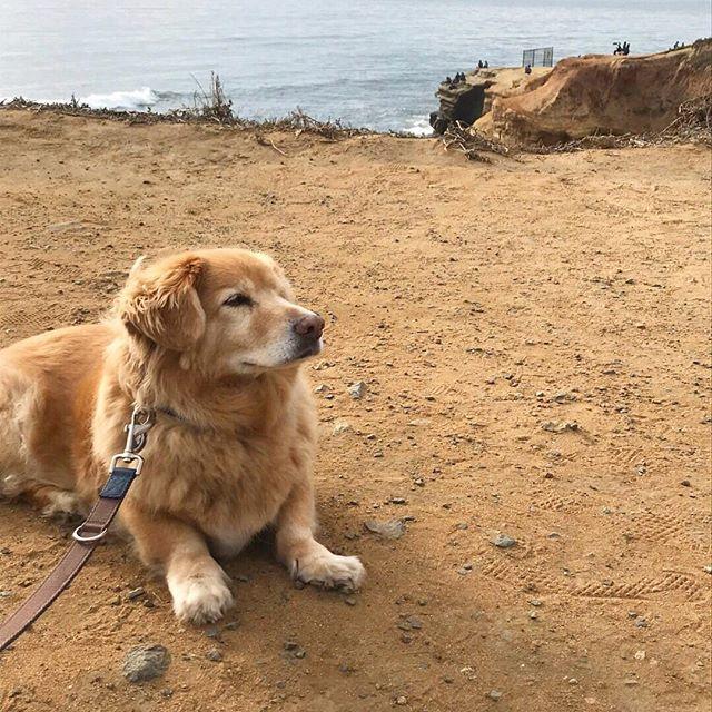 Happy Best Friend day to the best pup and design assistant I could ask for 🐶❤️✨ ⠀⠀⠀⠀⠀⠀⠀⠀⠀ #bestfriendsday #bestfriendday #mansbestfriends #corgimix #retrievermix #corgigram #atthebeach #dogbeach #beachdog #beachpup #puplove #cutedogsdaily #cutedogs_101 #cutepup #goldenretrieverlove #funnydogs #dogfun