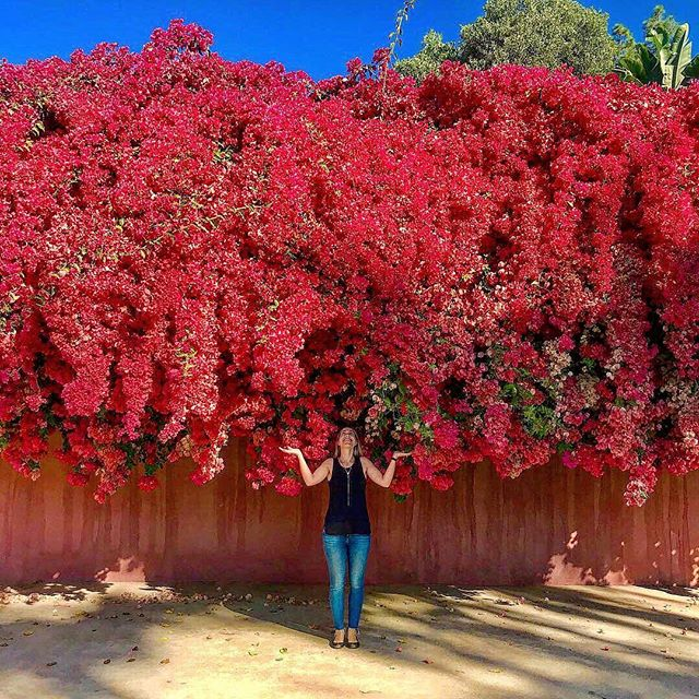 Bougainvillea bursting bright color all over California 😍 I love this color so much I just planted four in front of my house ❣️ ⠀⠀⠀⠀⠀⠀⠀⠀⠀ #trellis #flowers #fuscia #pinkflowers🌸 #garden_styles  #botanicalgardens #botanical #prettythings #naturelovers #summertime #flowergarden  #surroundyourselfwithbeauty #greenearth #backyardgarden #floral #greenthumb #plantinspo #climbingflowers #bougainvillea #inbloom #landscapedesign #landscapingideas #exteriordesign #bougainvillea #bougainvillier #ihavethisthingwithpink #pinkbougainvillea #flowerpower #flowerwall
