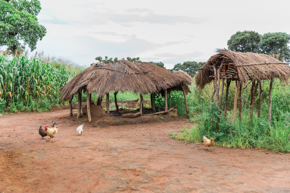 On the left is an Nsaka- which is like an outdoor living and cooking area and on the right is a chicken coop that is still in the construction stages.