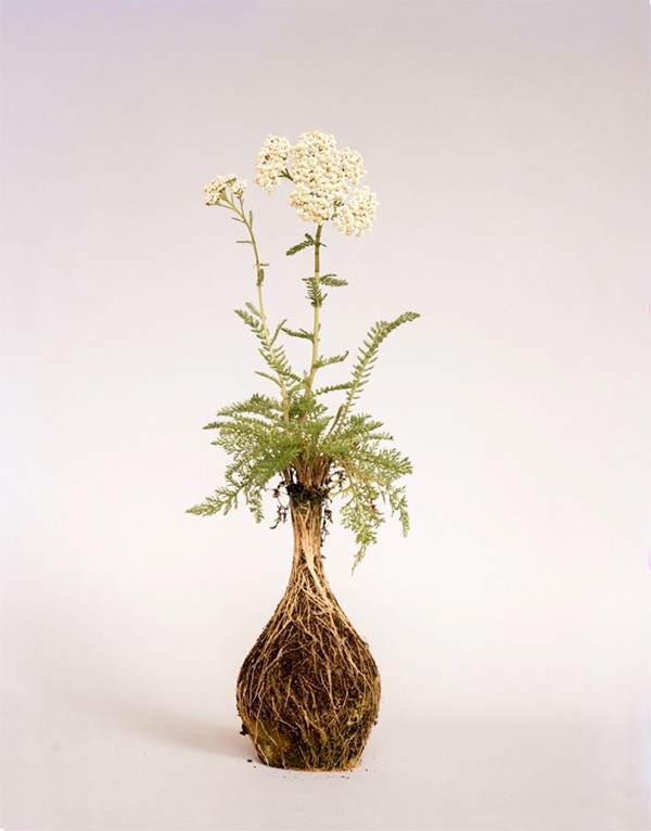 PP-Diana-Scherer-Flower-Art-7.jpg