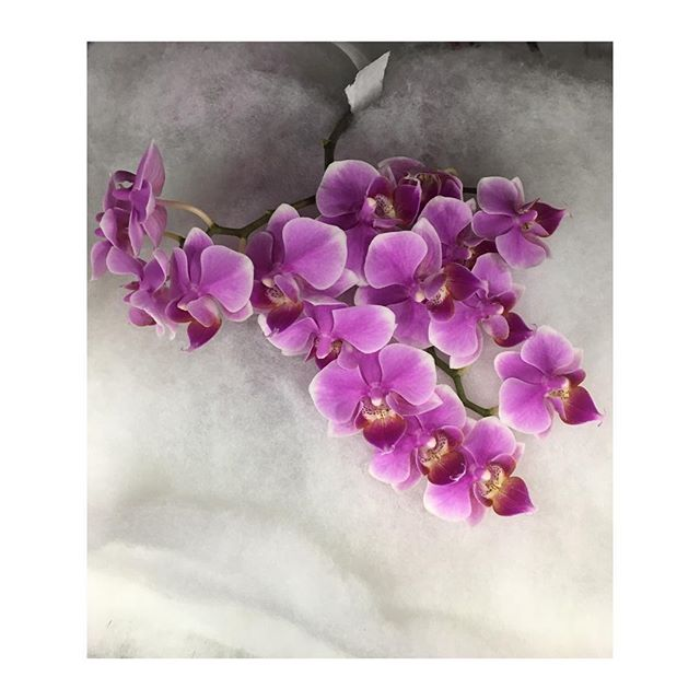 Orchids and packing snow