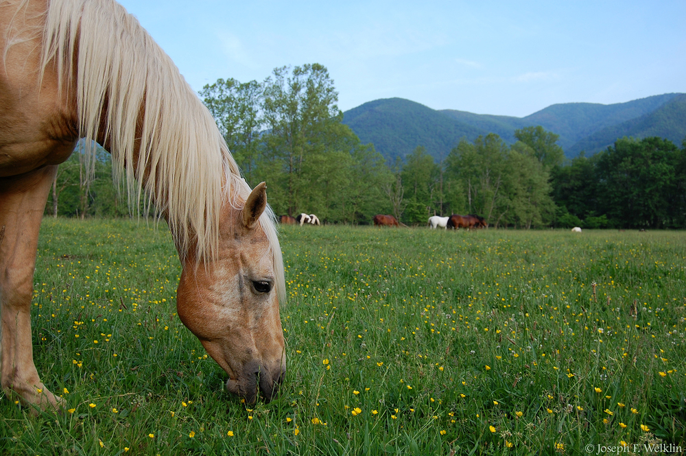 Cades Cove, Smokey Mountains
