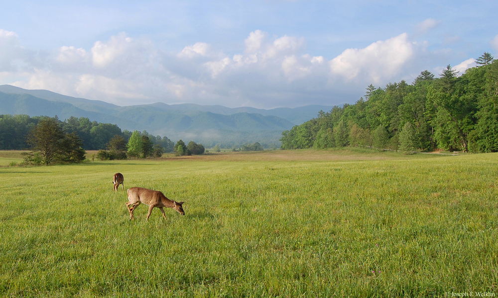 Cades Cove, Smokey Mountains.