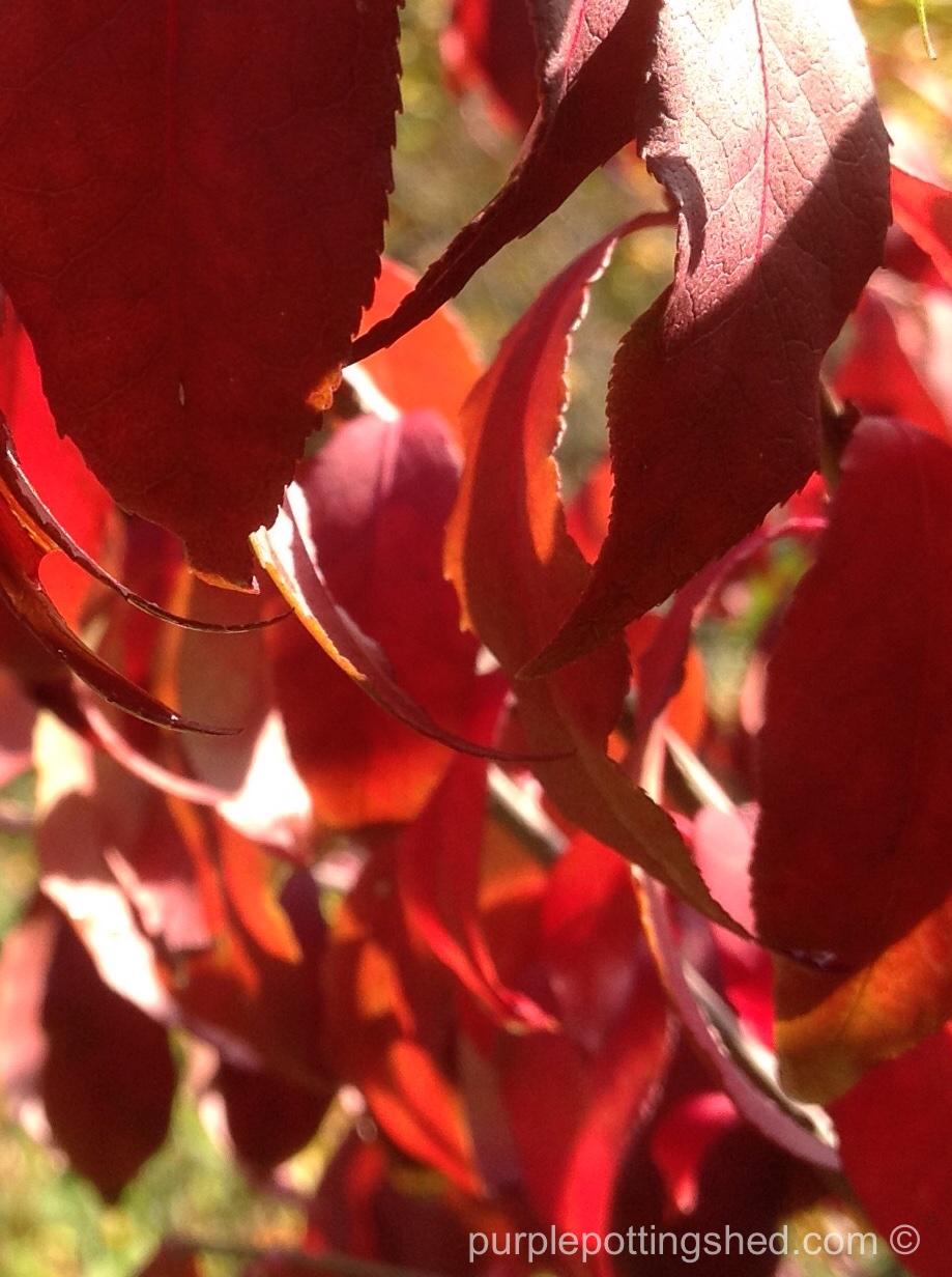 Burning bush, close up.jpg