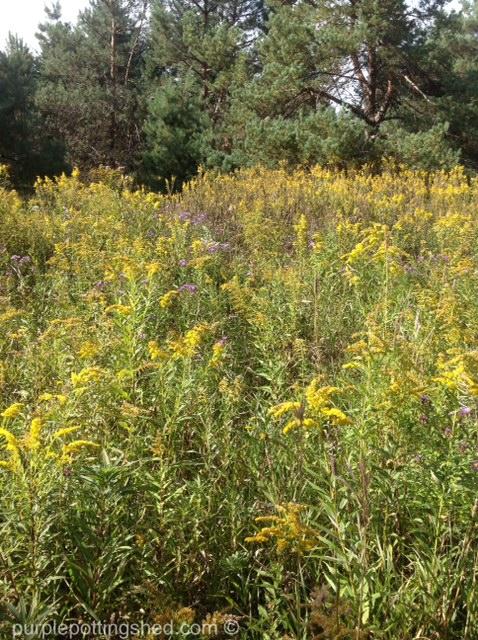 Meadow in September.jpg