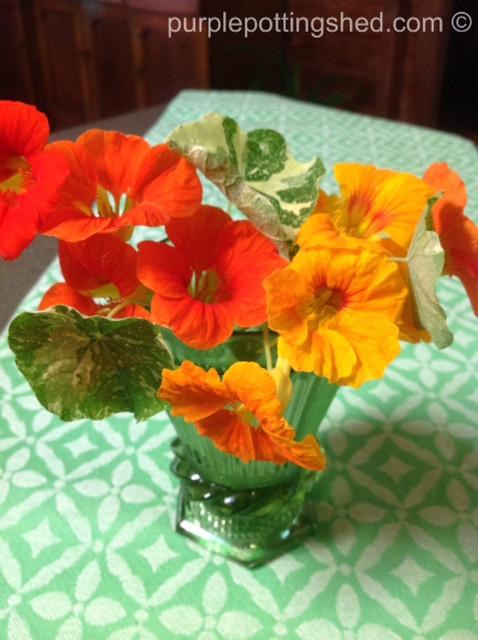 Nasturtiums in vase.jpg