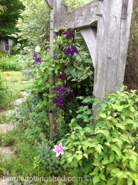 Arbour with clematis.jpg